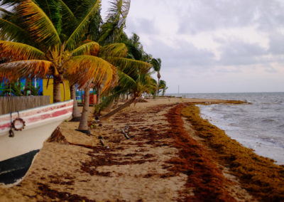 Dangriga Beach: You can see the seaweed here.