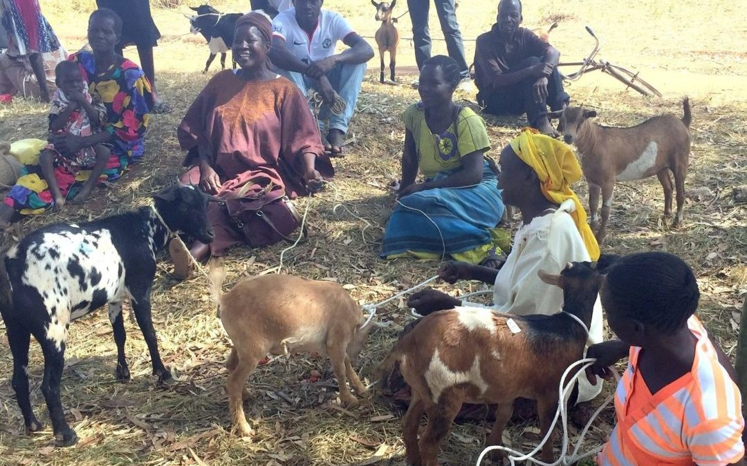 How Gospel Goats is Impacting Gulu, Uganda