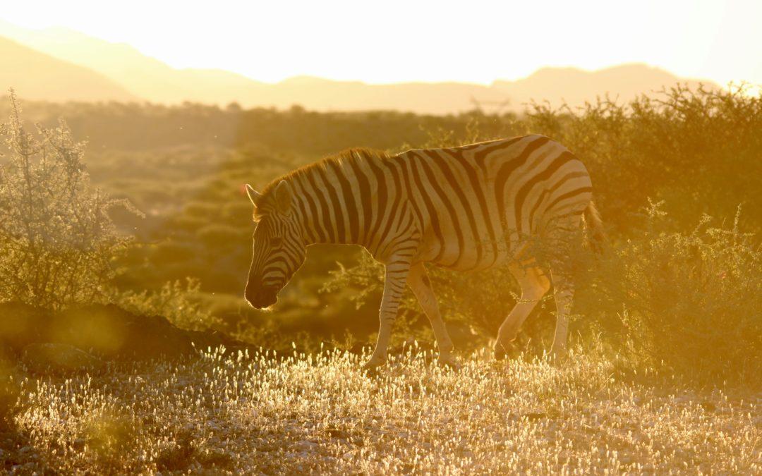 Namibia Trip Report 2018