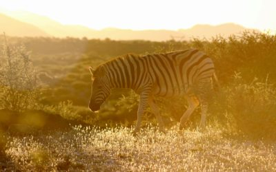 Namibia Trip Report 2018