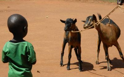 Goats, the Gospel, & COVID-19